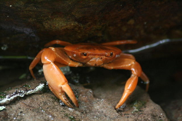 Picture of crab.