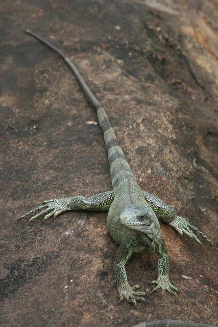 Picture of lizard.