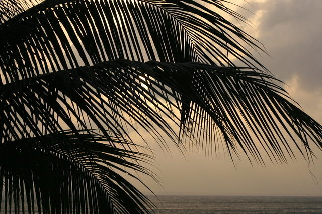 Picture of palm leaves.