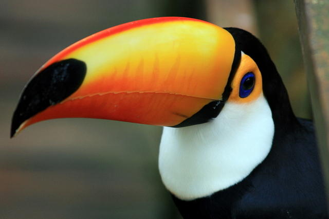 Picture of toucan.