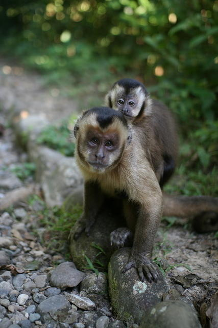 Picture of monkey.