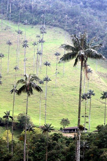 Picture of palms.