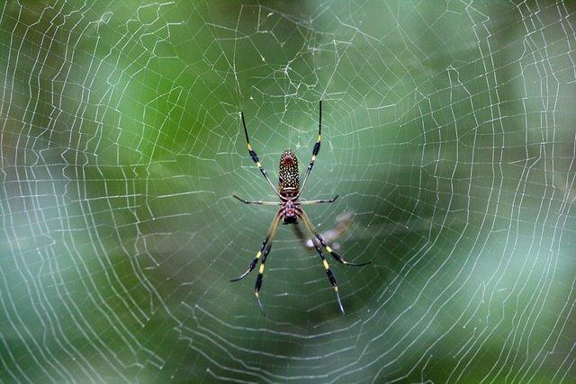 Picture of spider.