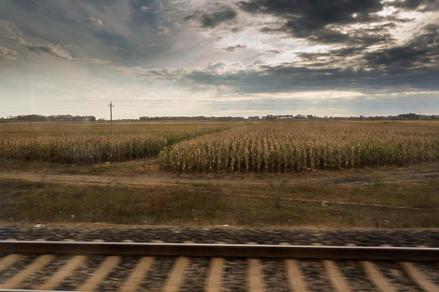 Picture of cornfields.
