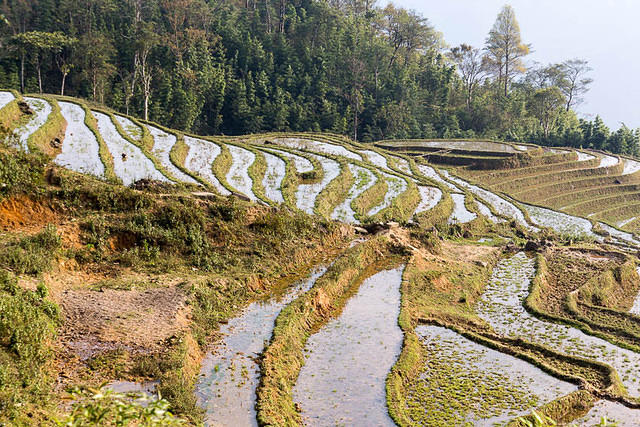 Picture of rice terraces.