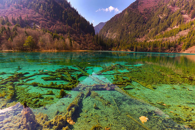 Picture of Panda Lake in Jiuzhaigou, China.