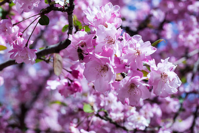 Picture of blossoms.