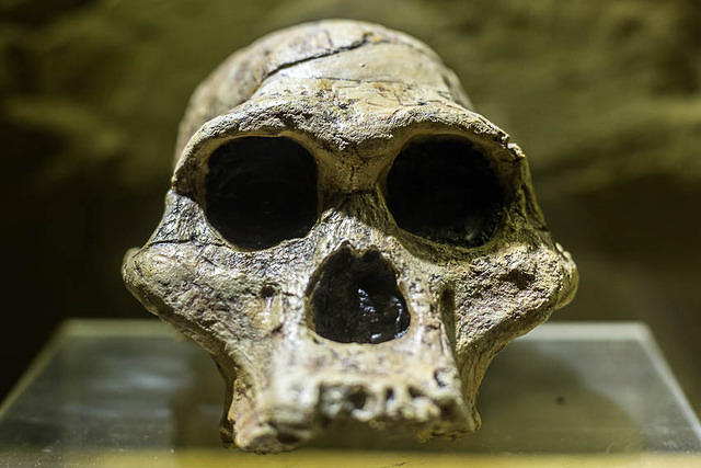 Picture of skull.