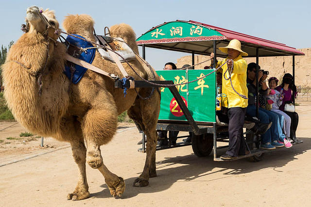Picture of camel.