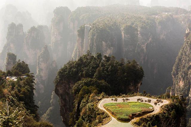 Zhangjiajie: Picture of tea farm.