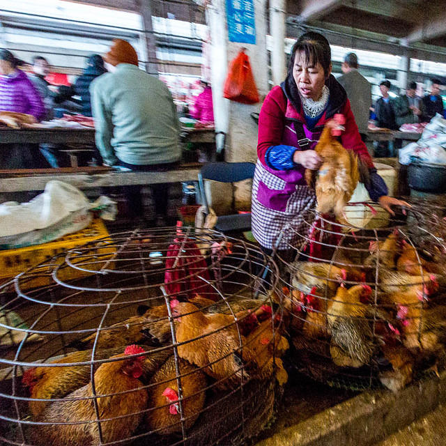 Fu Ling - Picture of chicken lady.