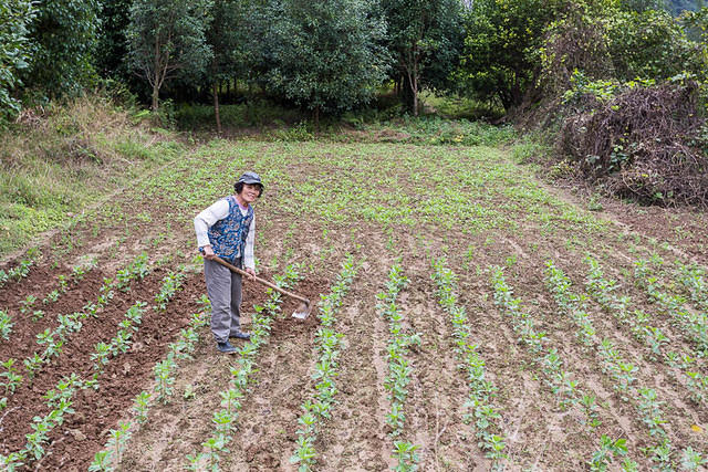 Yangshuo: Picture of farmer.