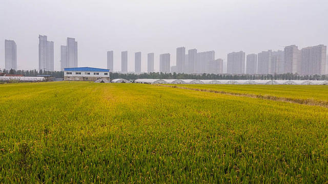 Shanghai - Picture of field.