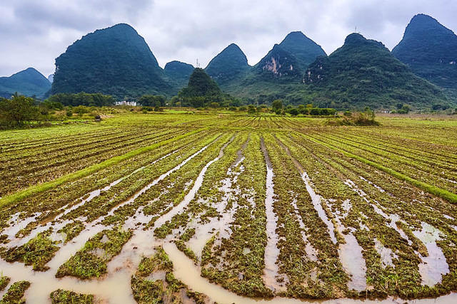 Yangshuo: Picture of field.