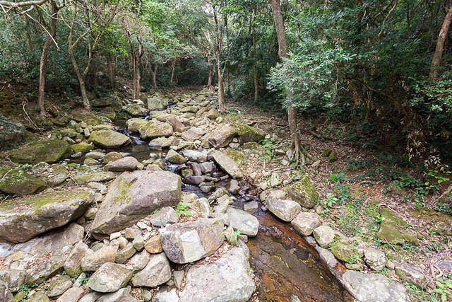 Hong Kong: Picture of forest.