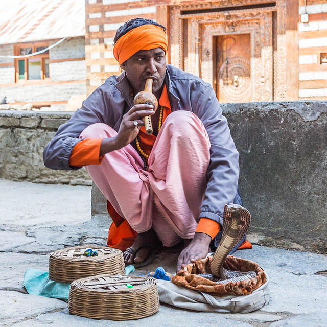 India: Picture of snake charmer in India.