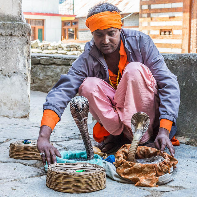 Picture of snake charmer in India.