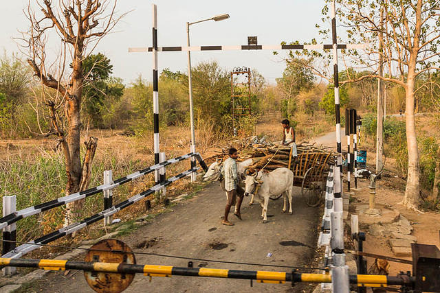 India: Picture of a cattle driven cart stopping for a train in India .
