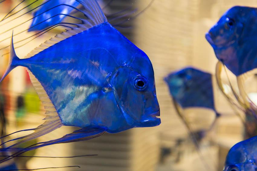 Dubai: Picture of fish.