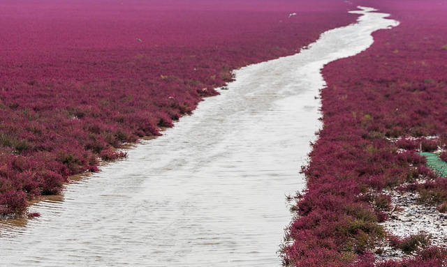 2016: Picture of the red algae.