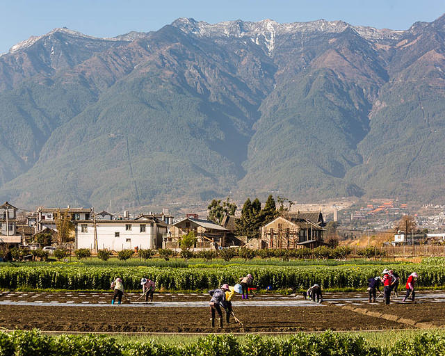 Erhai Lake: Picture of workers and mountains.