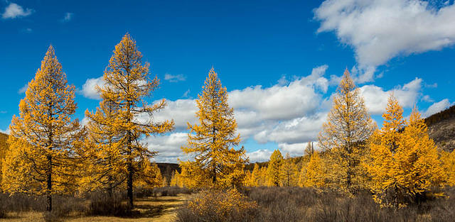 Mongolia: Picture of forest.