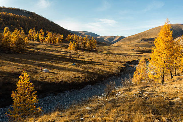 Mongolia: Picture of campsite.