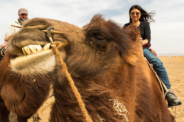 Gobi: Picture of Ruby on a camel.