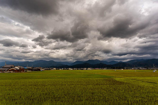 Picture of rice field in Japan..