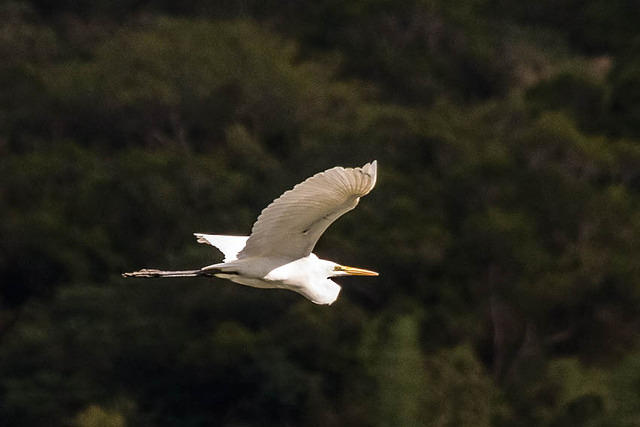 Random: Picture of egret.