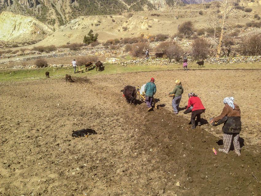 Picture of potato planters.