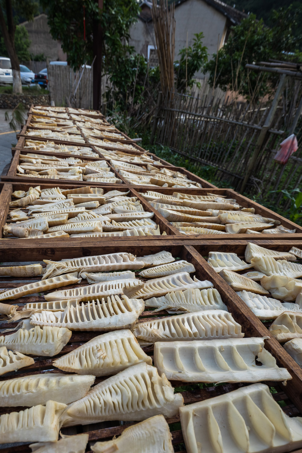 Picture of drying bamboo shoots.
