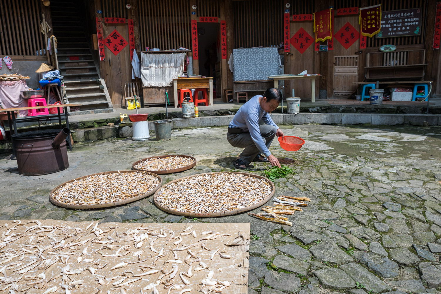 Picture of man laying out bamboo shoots.
