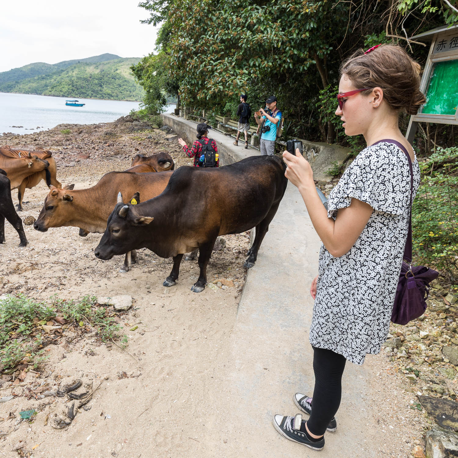 Picture of Miljana taking a picture of feral cows.