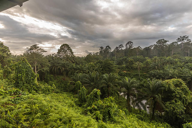 Picture of jungle from hotel room.