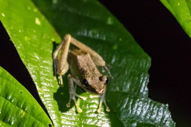 Picture of tree frog.