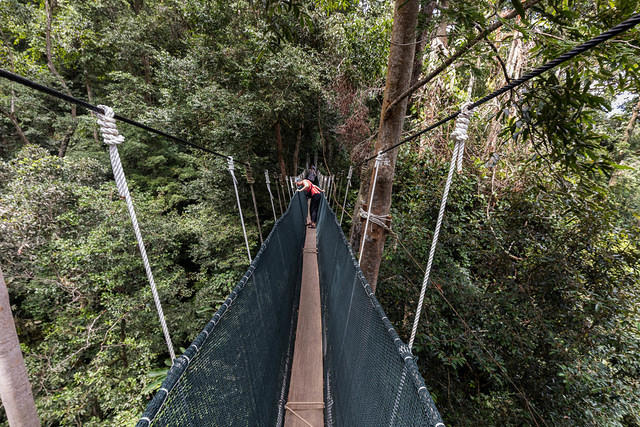 Picture of Katie at the canopy walk in Poring.