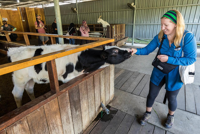 Picture of Katie feeding calf.