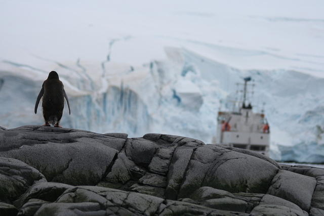 Picture of a gentoo penguin looking at a Russian ship.